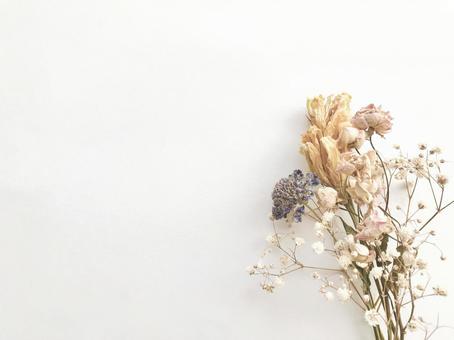 Dried flower 9