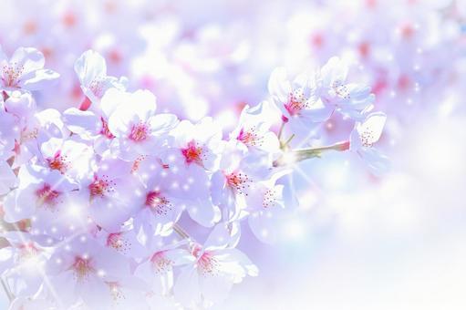 Full bloom cherry white
