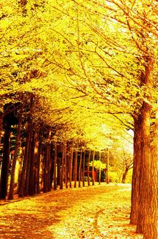 Row of ginkgo trees in late autumn