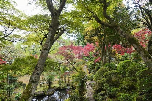 신기술 개발 재단 식물 연구 단지 봄의 단풍 일본 정원 별장