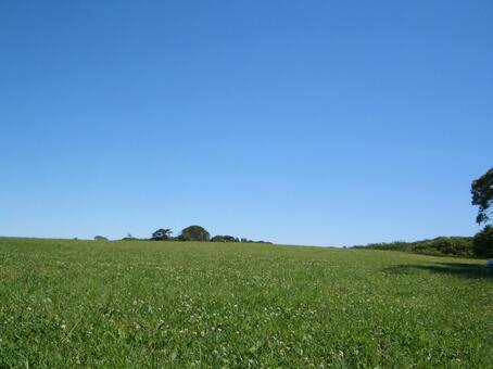 Blue sky and meadow
