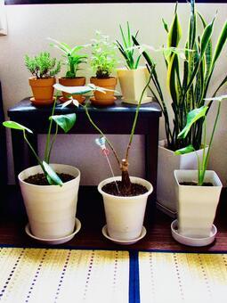 Houseplant 003