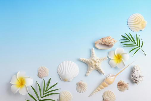 Shellfish summer image