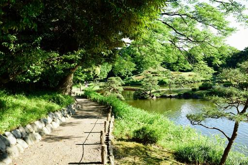 6 월 梅雨晴れ 맑고 정원 산책