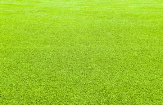 Ground lawn