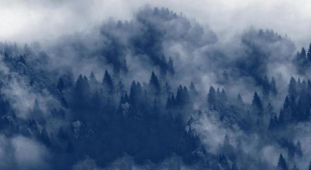 Fog forest background