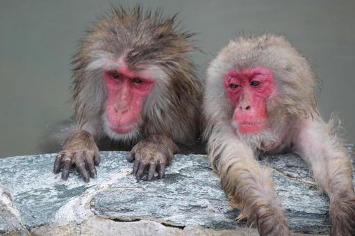 猴子的樣子