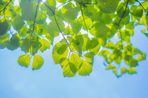 Summer green_blue sky