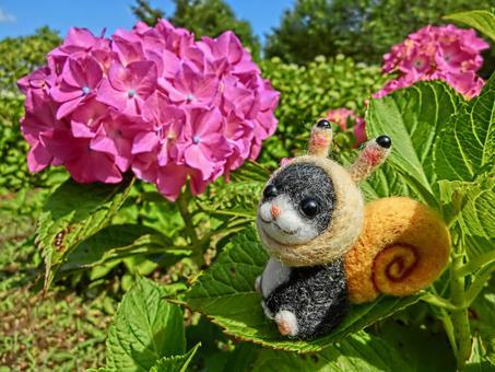 蝸牛貓和八仙花屬4