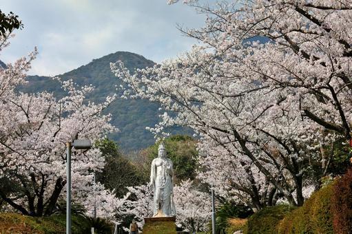 비잔 치산 기원 공 원의 벚꽃