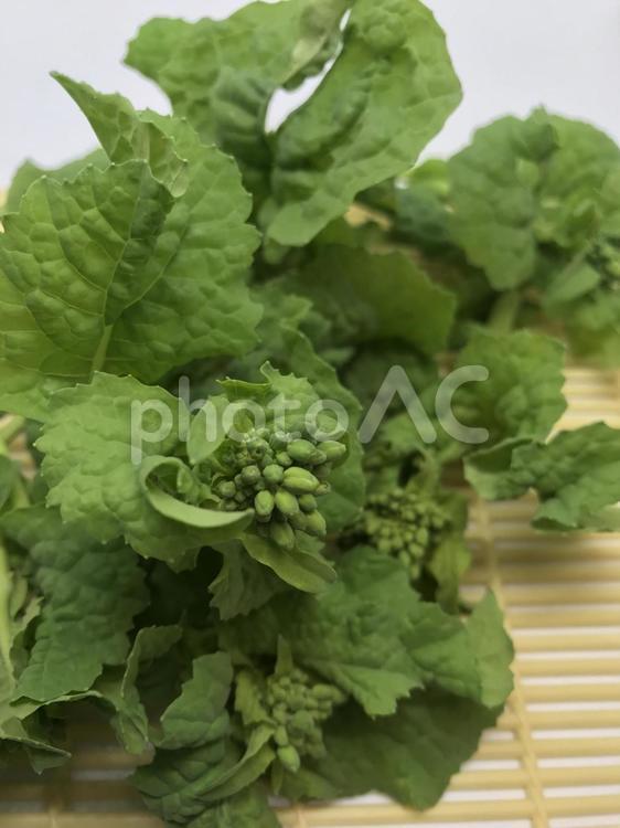 菜の花(食用)アップ大量の写真