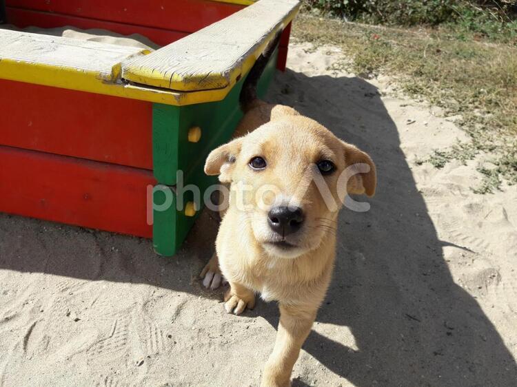 興味深々の子犬の写真