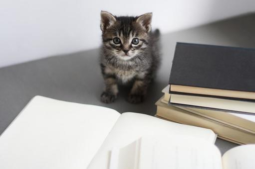 Kitten surrounded by books