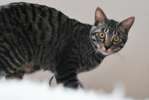 카메라 시선 고양이
