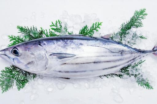 Book gatsuo fresh fish