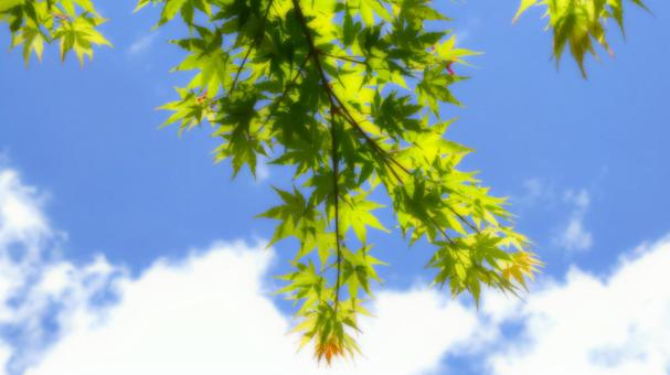 신록과 푸른 하늘